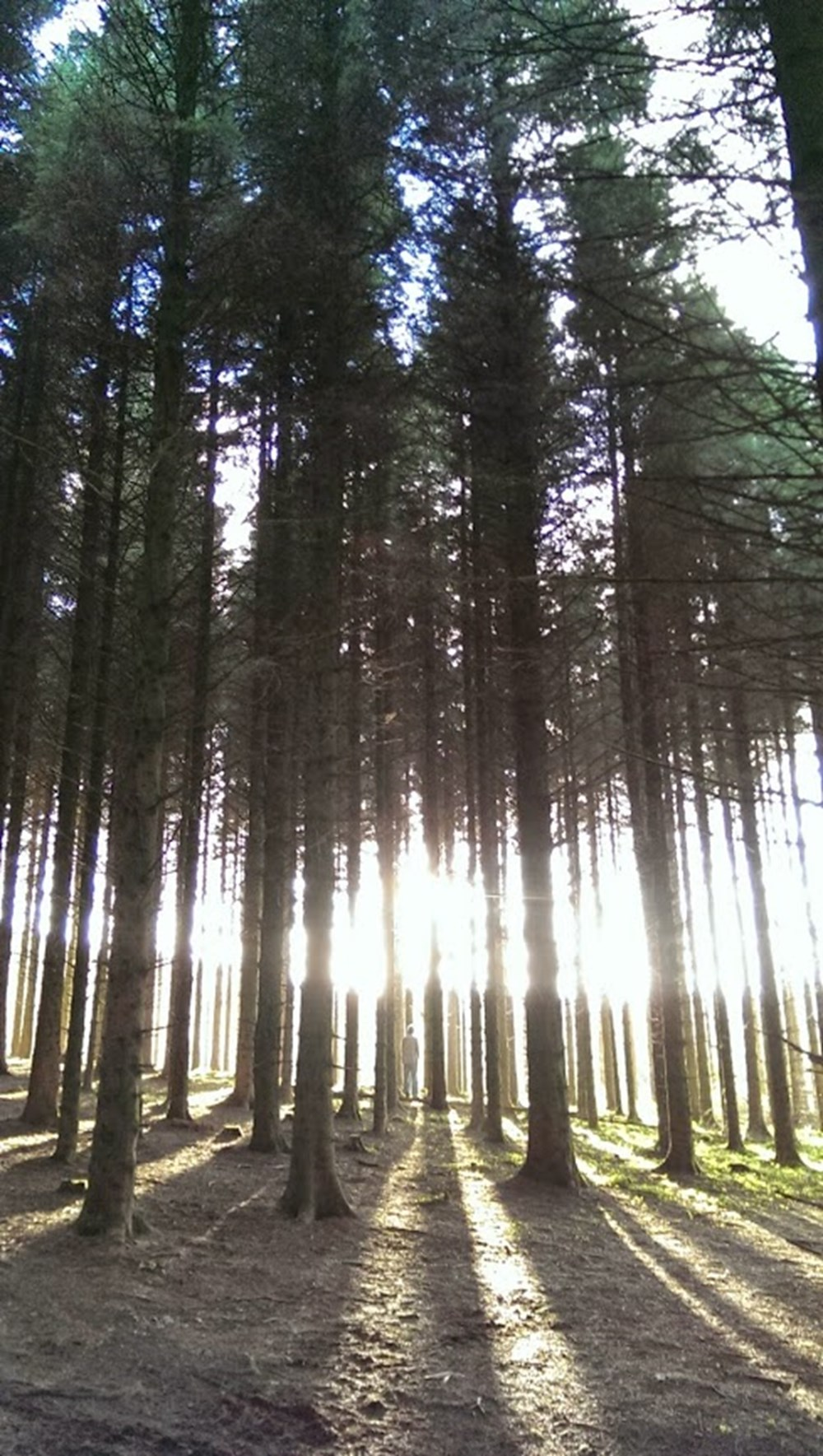 Ballyboley Forest